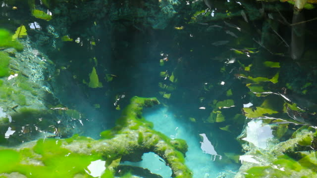 clear water spring in forest - fukuoka prefecture stock videos & royalty-free footage