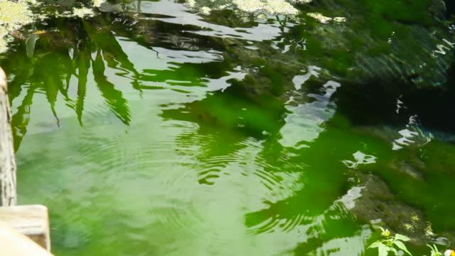森の澄んだ水の春 - landscape scenery点の映像素材/bロール