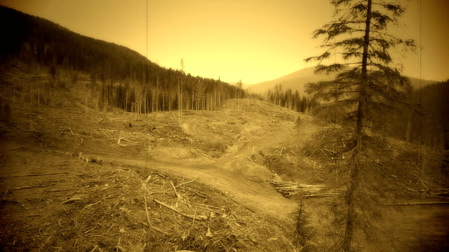 clear-cut deforestation - history stock videos & royalty-free footage