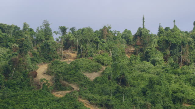 WS Cleared roads for logging / Tawau, Sabah, Malaysia