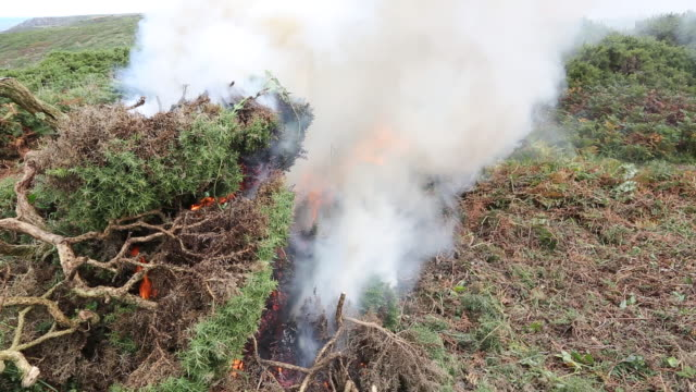 clearing invasive gorse scrub on the moorland abov - moor stock videos & royalty-free footage