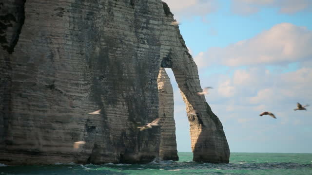 cliff formations, normandy, france - große tiergruppe stock-videos und b-roll-filmmaterial
