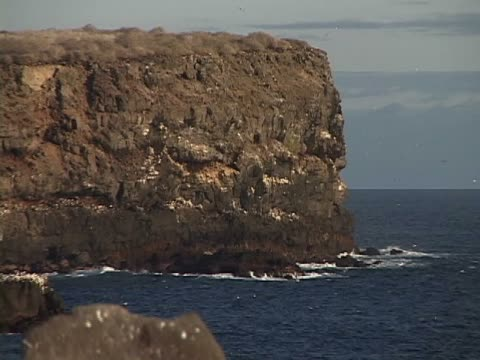 cliffs along the sea - vier tiere stock-videos und b-roll-filmmaterial