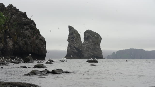 cliffs pacific coast of kamchatka peninsula, view of rocky islands in sea and colony of birds of pacific gulls nesting on cliffs of steep rocky sea shore - eurasia stock videos and b-roll footage