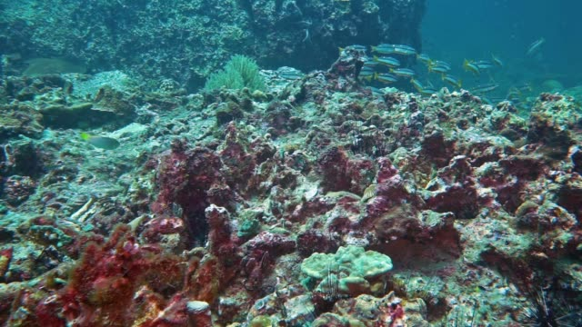climate change and pollution effects on destroyed coral reef - barriera corallina video stock e b–roll