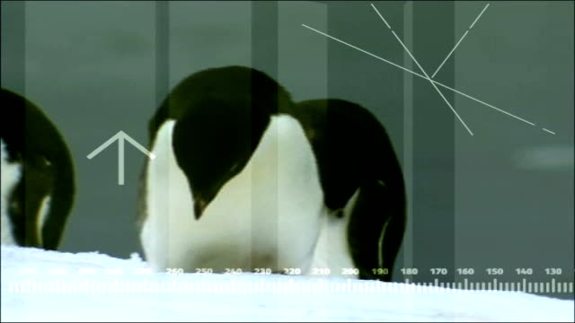 vídeos de stock, filmes e b-roll de 'big melt': antarctica: end highlights; graphicised shot of lawrence mcginty being attacked by large bird graphicised shot seal lying on ice sheet... - reportagem imagem