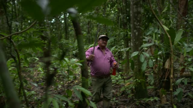 earth on the edge series deforestation in colombia colombia general views of trees animals and insects in amazon rainforest air views of forest and... - kolumbien stock-videos und b-roll-filmmaterial