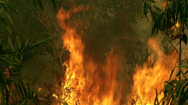 De verandering van het klimaat. Forest fire branden video Indonesië
