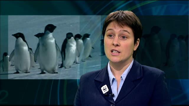 penguins under threat of extinction england london int emily lewisbrown interview sot - flightless bird stock videos & royalty-free footage