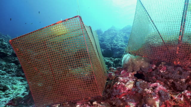 climate change research on underwater coral reefs marine biology scientific environmental study - environmental damage stock videos & royalty-free footage