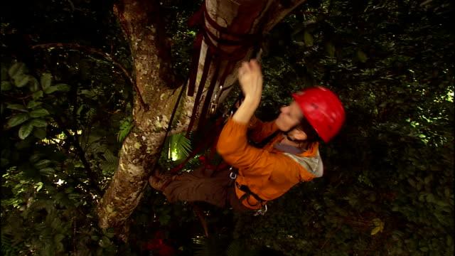 a climber checks her gear as she hangs in a tree. - 国有林点の映像素材/bロール