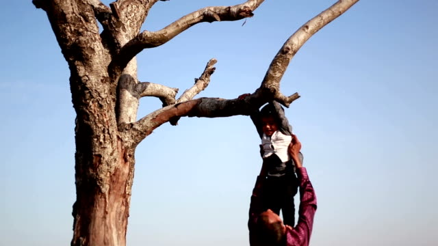 klettern - bare tree stock-videos und b-roll-filmmaterial