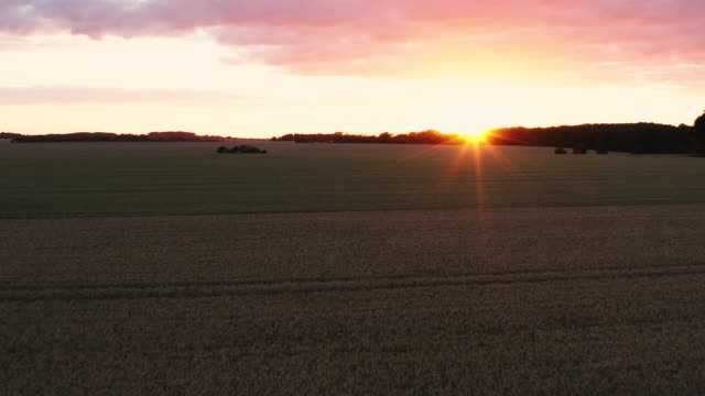 clip flying over a field of wheat at sunset - meadow stock videos & royalty-free footage