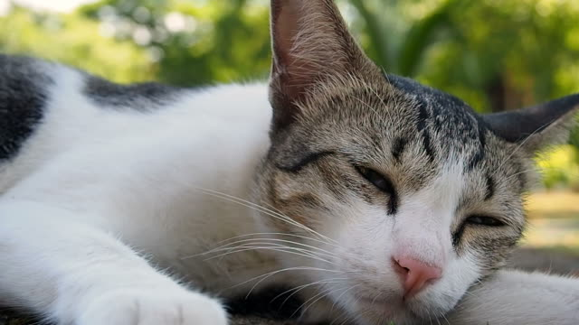 clode-up of cat sleep - silver coloured stock videos & royalty-free footage