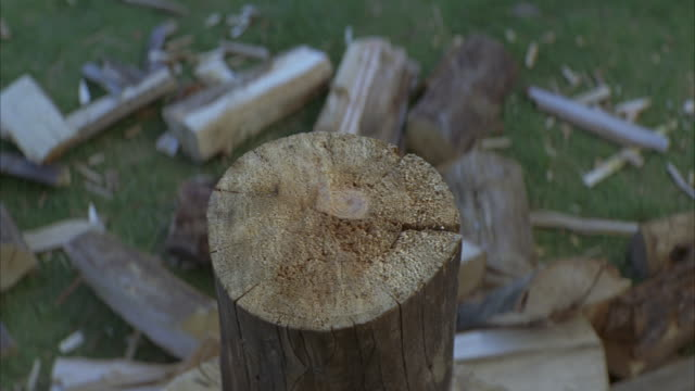 close angle of log of wood on chopping block. axe chops log. wood pile on ground next to stump.