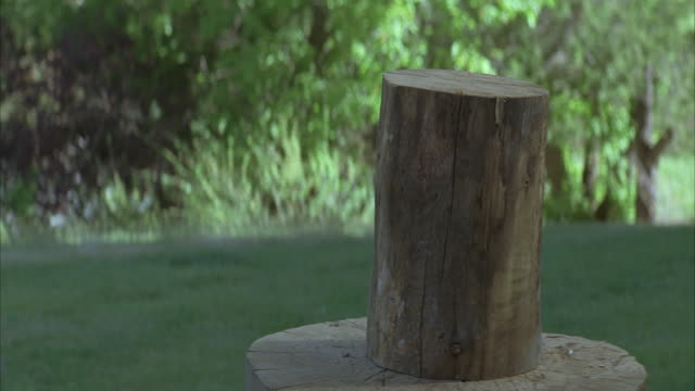 close angle of log of wood on chopping block. axe cuts wood in half. - ceppaia video stock e b–roll