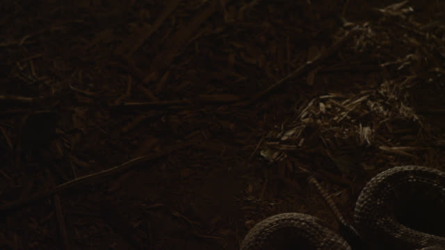 close angle of man's boot stepping near a rattlesnake. series. - viper stock videos & royalty-free footage