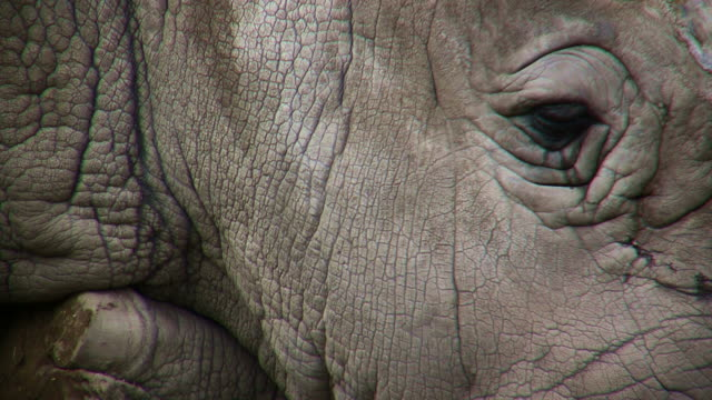 close on a rhino's face and eye. - rhinoceros stock videos & royalty-free footage