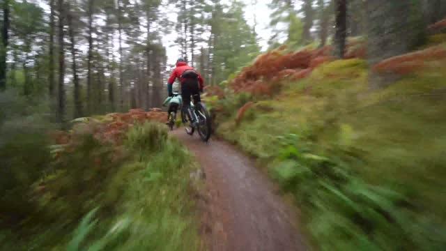森の自転車道に沿ってサイクリングする2人のマウンテンバイクライダーの近くの背面図 - サイクリングロード点の映像素材/bロール