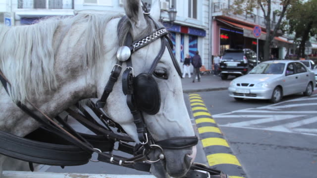 Close shot of a horse tethered to a post in the city of Odessa.