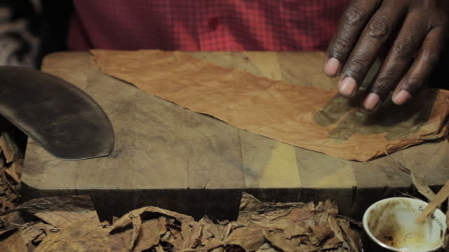 close shot of a man rolling a havana cigar. - sigaro video stock e b–roll