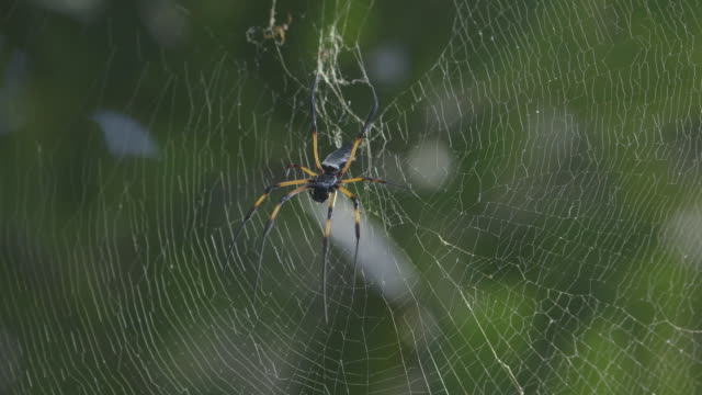 Close shot of a spider sitting in the centre of its web.