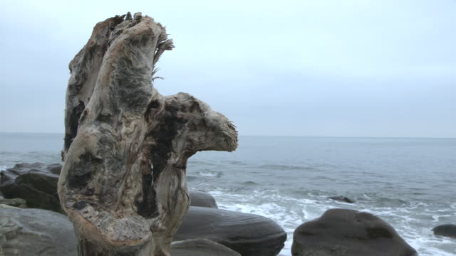 close shot of a weather-worn tree stump on a beach in dorset. - eroded stock videos & royalty-free footage