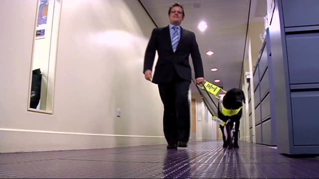 close shot of fingers of blind person reading braille book low angle shot of john dickinsonlilley walking along corridor with guide dog john... - assistive technology stock videos & royalty-free footage