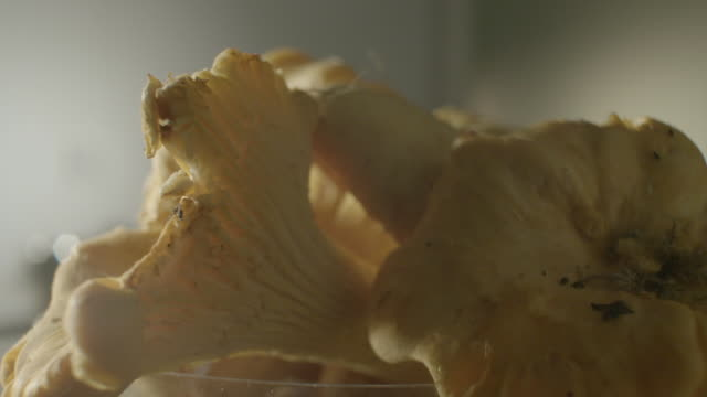 close shot of mushrooms slowly revolving in a glass bowl. - turning stock-videos und b-roll-filmmaterial