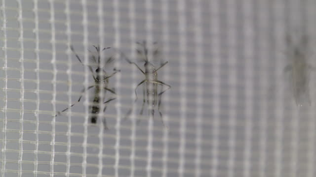 close shot of two mosquito. - netting stock videos and b-roll footage