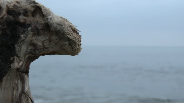 Close shot on a piece of weather worn wood on a beach.