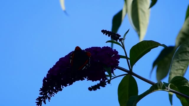 close up a butterfly at the garden during summer - bare tree stock videos & royalty-free footage