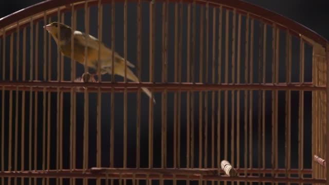 vídeos de stock e filmes b-roll de close up, a canary vigorously jumping in a wooden cage. general views of impanema favela in rio de janeiro, brazil on june 11, 2013. - jaula
