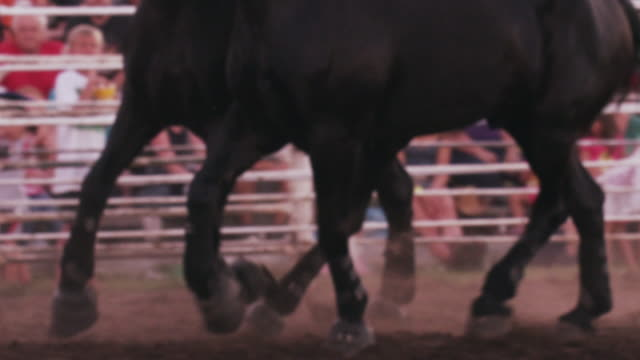 close up, a cowboy rides a team of six black horses around a rodeo ring - slow motion. - 1 minute or greater stock videos & royalty-free footage