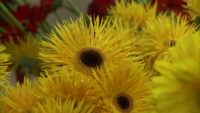 close up and zoom in to sunflowers. - staubblatt stock-videos und b-roll-filmmaterial