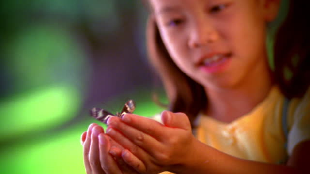 close up asian girl opening hands + revealing zebra butterfly / florida - butterfly stock videos & royalty-free footage