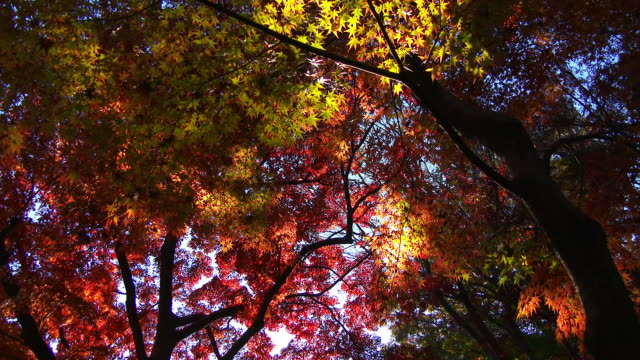 Close up autumn leaf