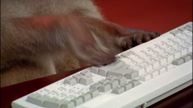 close up baboon paws hitting keyboard - computertastatur stock-videos und b-roll-filmmaterial