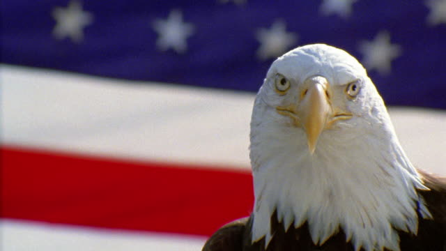 stockvideo's en b-roll-footage met close up bald eagle turning head in front of american flag - amerikaanse vlag