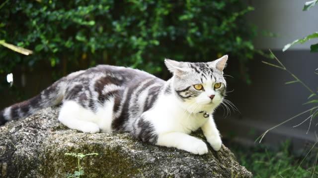 vídeos y material grabado en eventos de stock de cerrar hermosos ojos amarillos de gato tabby relajarse en el jardín al aire libre - vibrisas