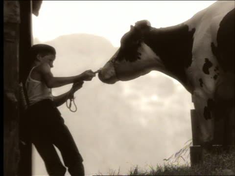 stockvideo's en b-roll-footage met sepia close up boy in cap + suspenders pulling reluctant cow into barn - kleurtoon