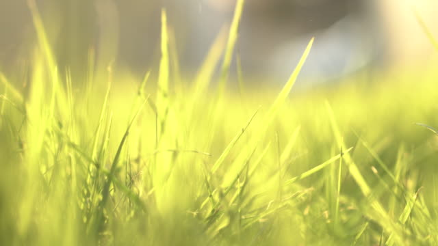 close up bug and grass in the morning time - turf stock videos & royalty-free footage
