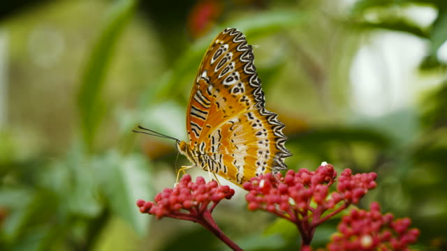 close up butterfly on tree - butterfly garden stock videos & royalty-free footage