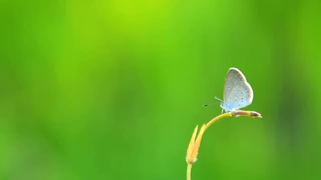 バタフライのクローズアップ - 昆虫点の映像素材/bロール