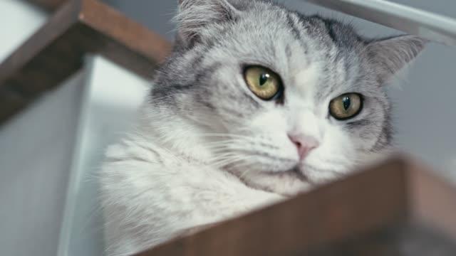 自宅で猫かわいいペットをクローズアップ - 動物の頭点の映像素材/bロール