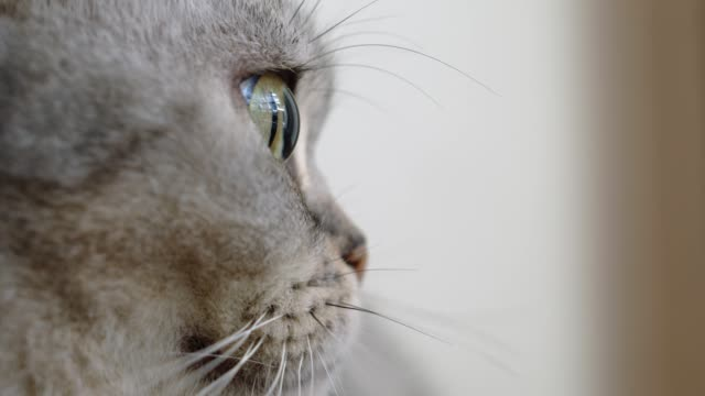 close up cat eye. a cat blinking, feeling lonely. - cat blinking stock videos & royalty-free footage