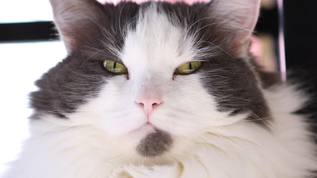 close up cat face - cat blinking stock videos & royalty-free footage