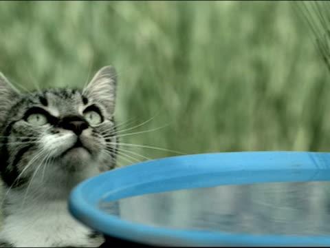 vídeos y material grabado en eventos de stock de close up cat leaning on birdbath and looking up / pawing at the air - baño para pájaros