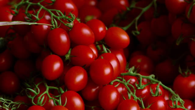 close up pan cherry tomatoes / munich, germany - cherry tomato stock videos & royalty-free footage