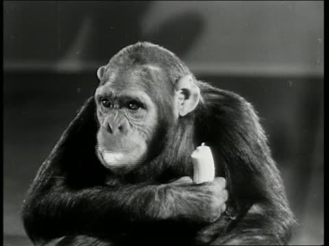 B/W 1941 close up chimpanzee eating banana / Of Pups and Puzzles